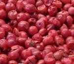 Rosa Pfefferbeeren