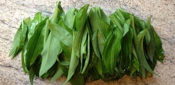 Bärlauch Blätter